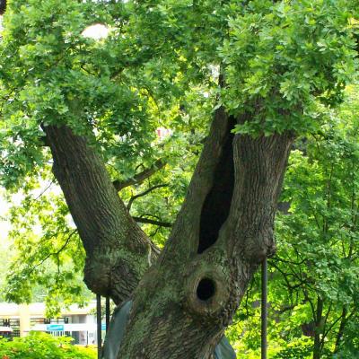 Das Baum-Paar