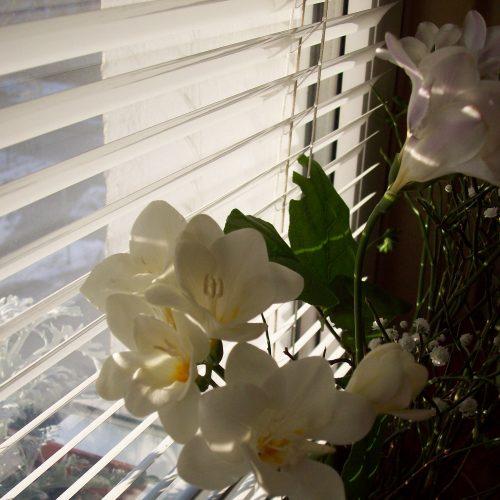 Freesien am Fenster